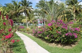 jardin guadeloupe